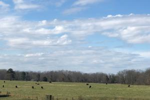 Phil Campbell Cattle Farm and Homesite in Franklin, AL (21 of 23)