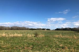 Phil Campbell Cattle Farm and Homesite in Franklin, AL (9 of 23)