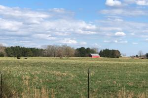 Phil Campbell Cattle Farm and Homesite in Franklin, AL (11 of 23)