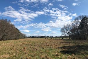 Phil Campbell Cattle Farm and Homesite in Franklin, AL (19 of 23)