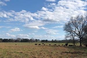 Phil Campbell Cattle Farm and Homesite in Franklin, AL (3 of 23)