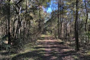 Myers Hill Road Estate - Glynn County GA