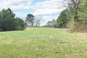Pretty Branch Homesite and Recreational Property in Franklin, AL (16 of 19)