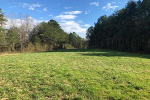 Pretty Branch Homesite and Recreational Property in Franklin, AL (14 of 19)