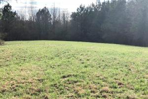 Pretty Branch Homesite and Recreational Property in Franklin, AL (13 of 19)