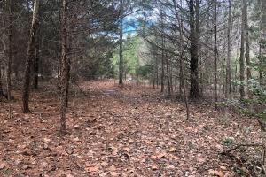 South Anna River Homesite  in Hanover, VA (8 of 18)