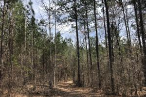 Lake Martin 450 Hunting and Timber Investment in Elmore, AL (19 of 53)