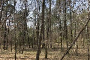 Lake Martin 450 Hunting and Timber Investment in Elmore, AL (17 of 53)