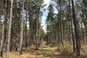 Lake Martin 450 Hunting and Timber Investment in Elmore, AL (25 of 53)