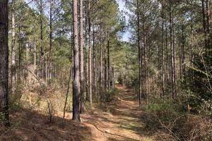 Lake Martin 450 Hunting and Timber Investment in Elmore, AL (43 of 53)