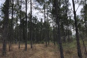 Lake Martin 450 Hunting and Timber Investment in Elmore, AL (18 of 53)