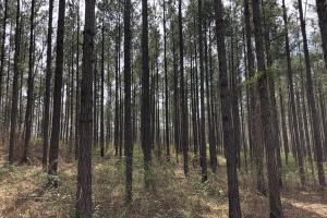 Lake Martin 450 Hunting and Timber Investment in Elmore, AL (26 of 53)