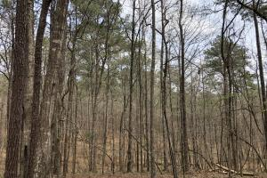 Lake Martin 450 Hunting and Timber Investment in Elmore, AL (5 of 53)