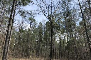 Lake Martin 450 Hunting and Timber Investment in Elmore, AL (28 of 53)