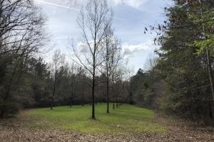 Lake Martin 450 Hunting and Timber Investment in Elmore, AL (30 of 53)