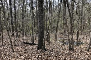 Lake Martin 450 Hunting and Timber Investment in Elmore, AL (27 of 53)