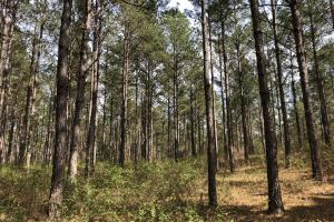 Lake Martin 450 Hunting and Timber Investment in Elmore, AL (41 of 53)