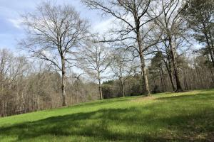 Lake Martin 450 Hunting and Timber Investment in Elmore, AL (38 of 53)