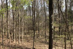 Lake Martin 450 Hunting and Timber Investment in Elmore, AL (42 of 53)