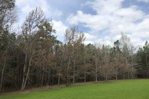 Eclectic 97 Acre Homesite