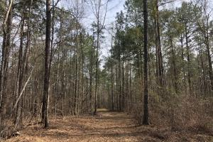 Eclectic  33  Homesite and Timber in Elmore, AL (2 of 9)