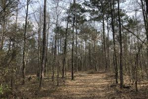 Eclectic  33  Homesite and Timber in Elmore, AL (3 of 9)