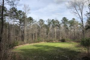 Eclectic  33  Homesite and Timber in Elmore, AL (1 of 9)