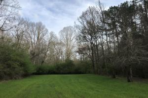 Eclectic 149 Timber and Hunting Tract