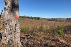Deer Hunting Property - Attala County MS