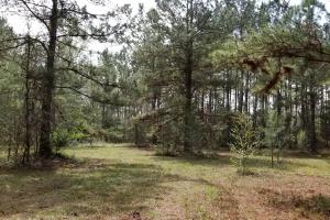 Recreational Retreat/ Ranch Bordering National Forest in San Jacinto, TX (22 of 36)