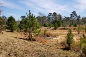 Recreational Retreat/ Ranch Bordering National Forest in San Jacinto, TX (2 of 36)