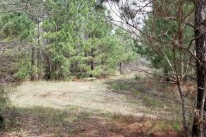 Recreational Retreat/ Ranch Bordering National Forest in San Jacinto, TX (18 of 36)