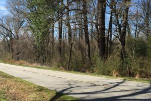 Unrestricted Kenly Wooded Lot in Wilson, NC (2 of 7)