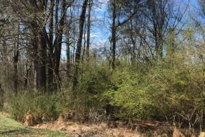 Unrestricted Kenly Wooded Lot - Wilson County NC