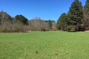 Cahulga Creek Recreation & Timber Tract - Cleburne County AL