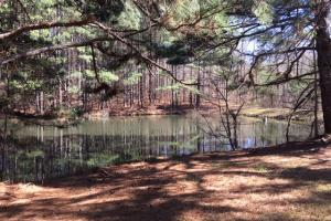 Cahulga Creek Recreation & Timber Tract in Cleburne, AL (17 of 43)