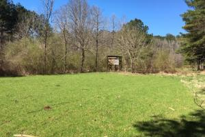 Cahulga Creek Recreation & Timber Tract in Cleburne, AL (4 of 43)