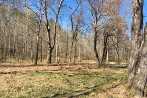 Cahulga Creek Recreation & Timber Tract in Cleburne, AL (12 of 43)
