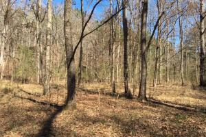 Cahulga Creek Recreation & Timber Tract in Cleburne, AL (11 of 43)