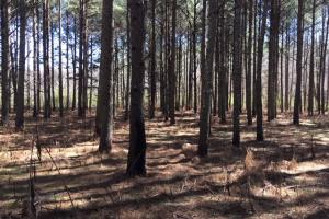 Cahulga Creek Recreation & Timber Tract in Cleburne, AL (14 of 43)