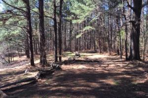 Cahulga Creek Recreation & Timber Tract in Cleburne, AL (40 of 43)