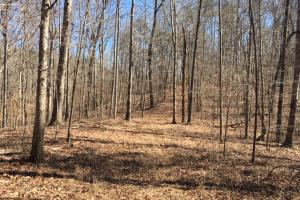 Cahulga Creek Recreation & Timber Tract in Cleburne, AL (9 of 43)