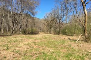 Cahulga Creek Recreation & Timber Tract in Cleburne, AL (18 of 43)