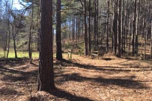 Cahulga Creek Recreation & Timber Tract in Cleburne, AL (22 of 43)