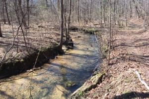Cahulga Creek Recreation & Timber Tract in Cleburne, AL (2 of 43)
