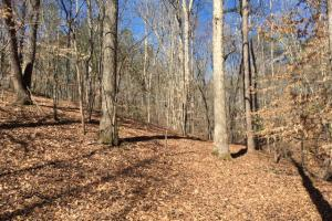 Cahulga Creek Recreation & Timber Tract in Cleburne, AL (38 of 43)