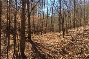 Cahulga Creek Recreation & Timber Tract in Cleburne, AL (8 of 43)