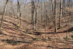 Cahulga Creek Recreation & Timber Tract in Cleburne, AL (39 of 43)