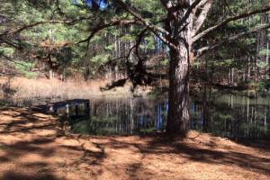 Cahulga Creek Recreation & Timber Tract in Cleburne, AL (21 of 43)