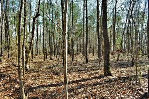 Coaling Timber Investment and Hunting Property in Tuscaloosa, AL (9 of 16)